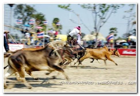 วัวลาน เพชรบุรี(travel wualan phetchaburi thailand)